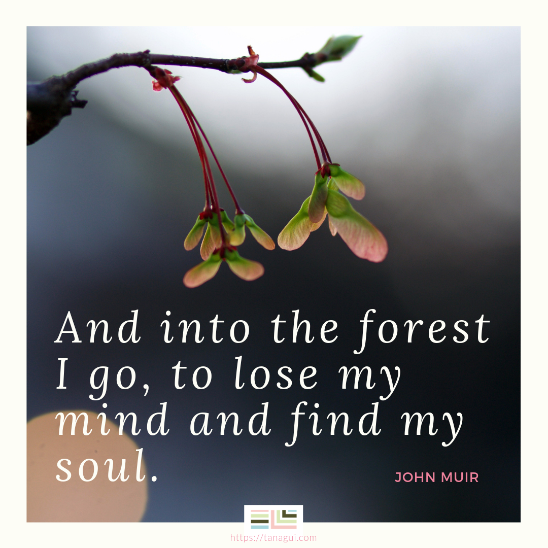 And into the forest I go, to lose my mind and find my soul. - John Muir